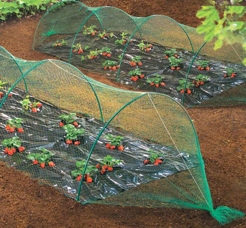 Rede de Aves proteção para plantações Birdnet Nortene 120005